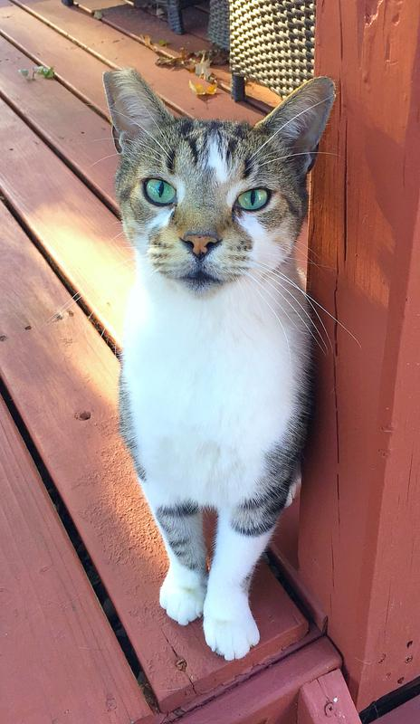 Cat sitter for outdoor cats in Hilliard