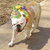 Bailey on her birthday!  All her friends stopped by and hated me for making them wear birthday hats!  teehee